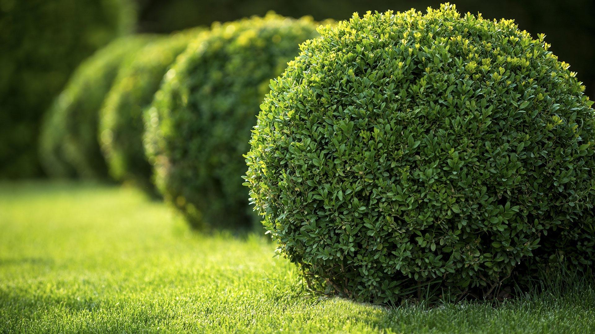 PR Landscaping Inc Commercial Property Maintenance slide 1